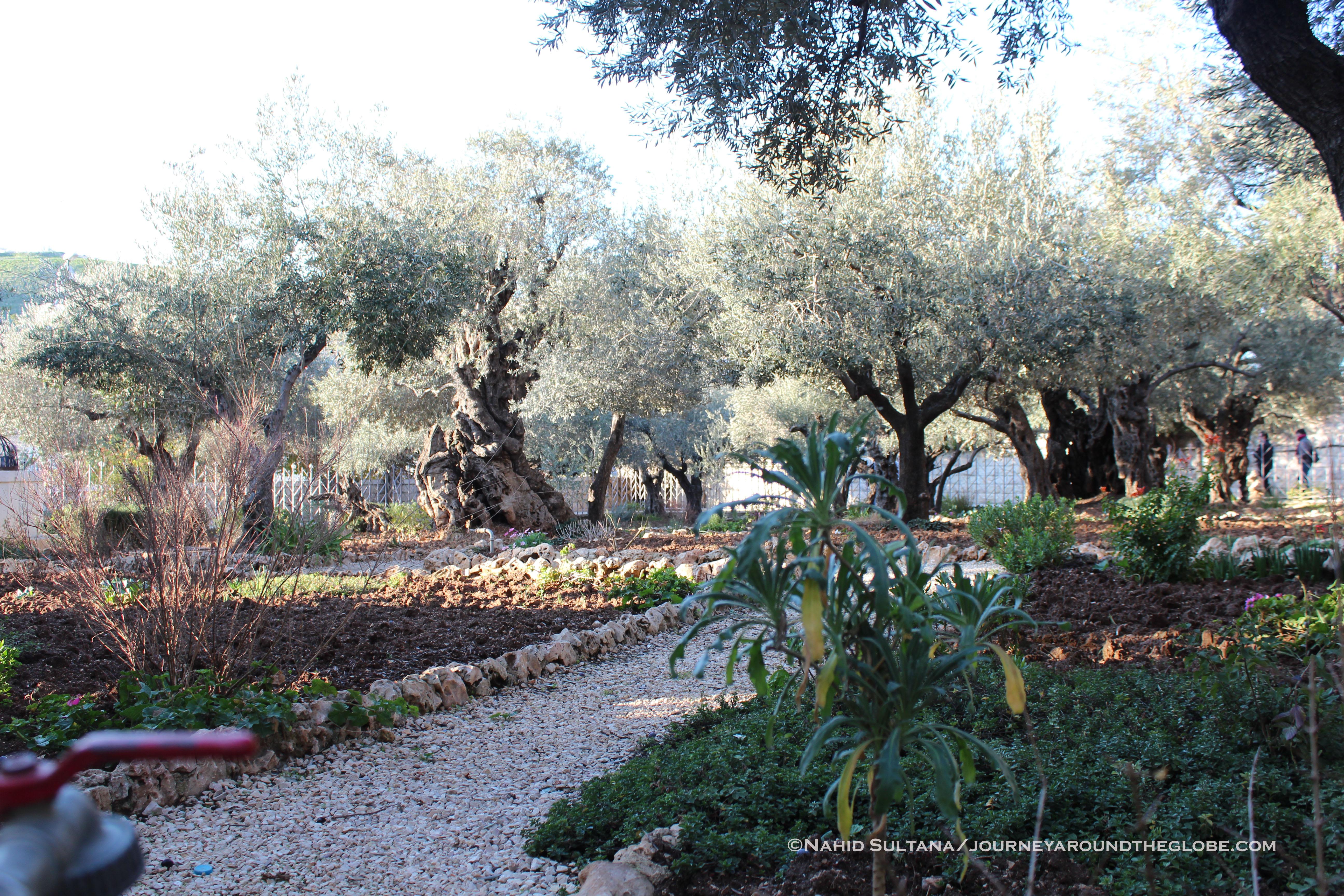 Jerusalem journey around the globe - Jesus in the garden of gethsemane ...