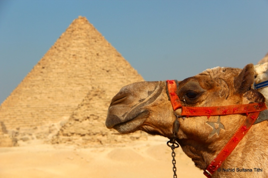 Pyramids of Giza and our ride in the desert of Egypt