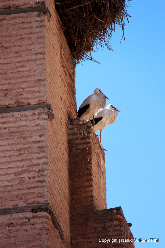 Walls of El Badi Palace in Marrakech - home of lots of storks and stray cats