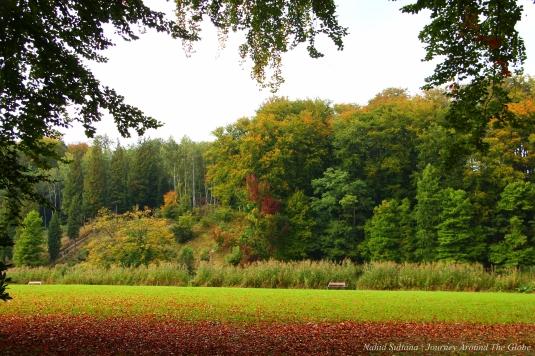 Fall colors in Soignes Forest in Belgium