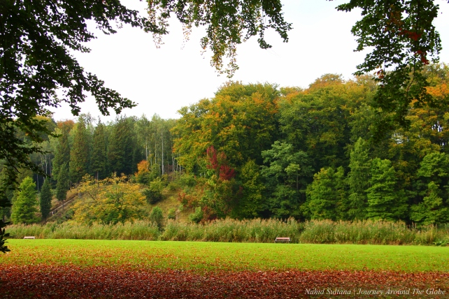 Fall colors in Soignes Forest in Belgium