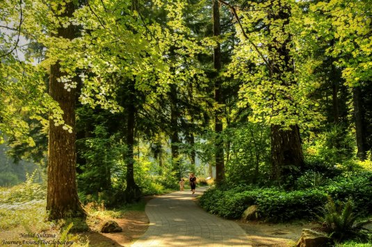 Lush greenery of Silver Falls State Park in Oregon