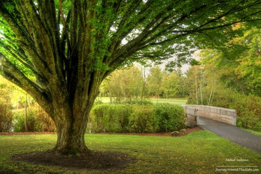 Famous tree of Commonwealth Lake Park in Oregon