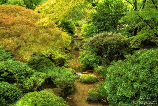 A small stream running down in the middle of Portland Japanese Garden in Oregon