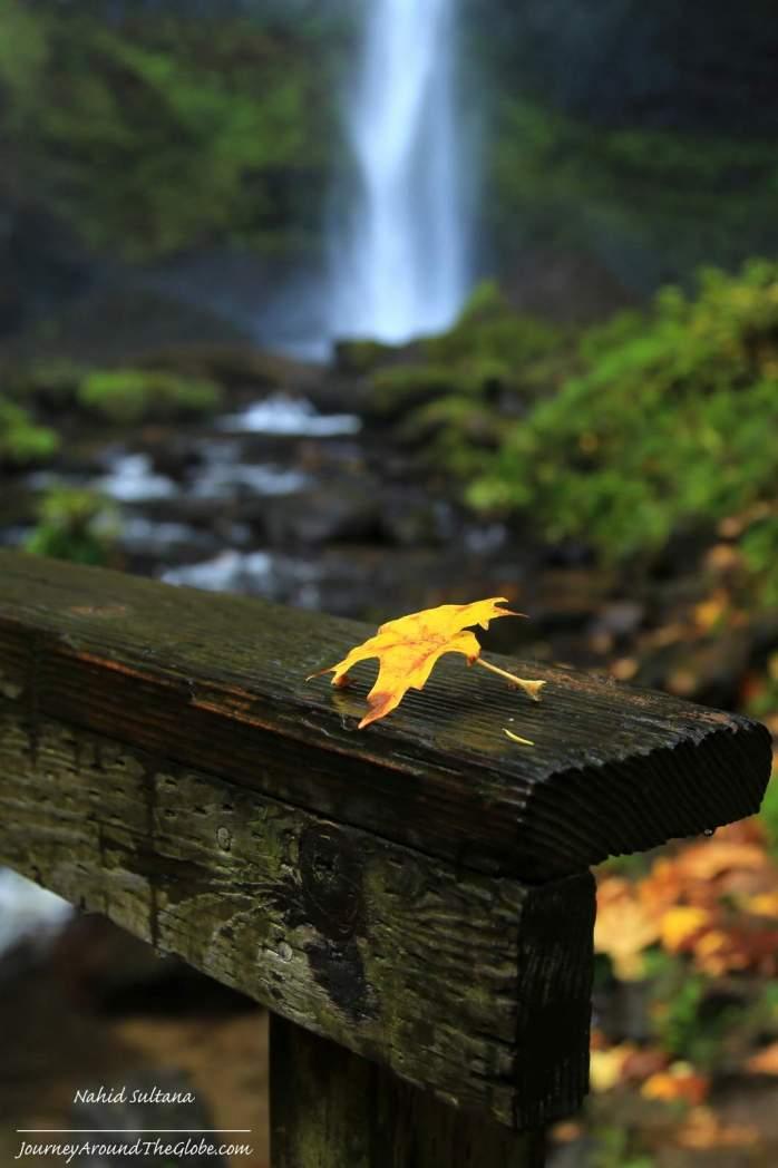 A magical fall morning in Latourell Falls in Oregon