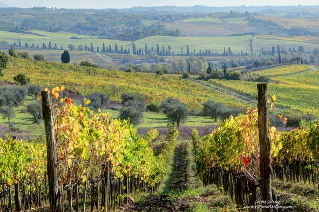 Tuscan vineyards- on our way to Siena