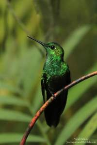 Humming bird sanctuary in La Paz Waterfalls Garden in Costa Rica