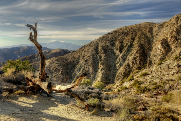 Beautiful landscape of Joshua Tree National Park, California