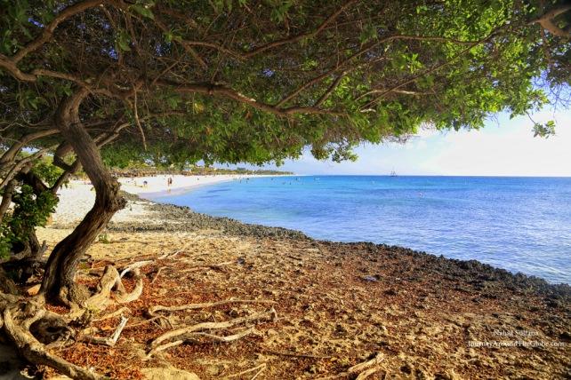 Under a Divi tree Eagle Beach in Aruba